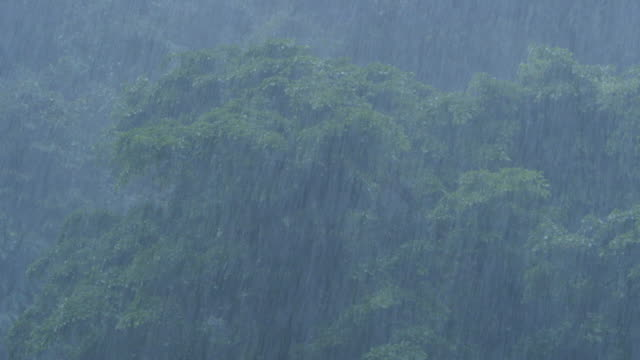 MS Torrential rain in rainforest / Bukit Lawang, North Sumatra, Indonesia