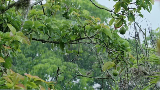 torrential rain in the rainy season a tropical rainforest. green themes - tropical tree stock videos & royalty-free footage