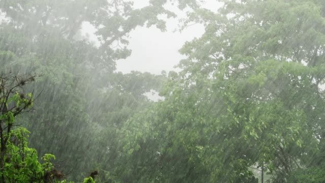 torrential rain in the rainy season a tropical rainforest - raining cats and dogs stock videos & royalty-free footage