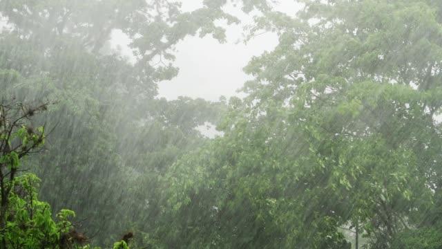 vídeos y material grabado en eventos de stock de lluvia torrencial en la temporada de lluvias una selva tropical - lluvia torrencial