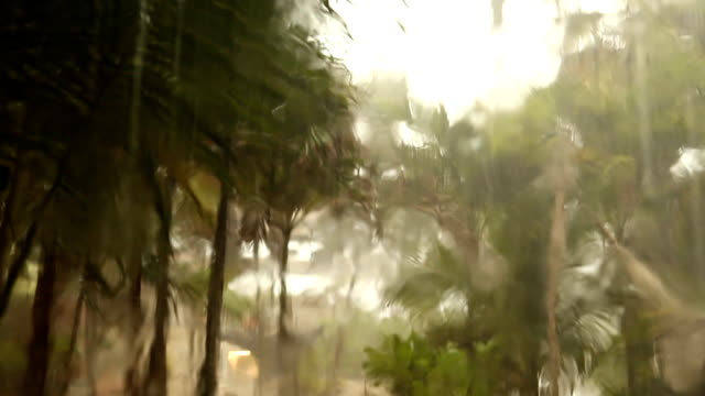 torrential rain in tulum mexico - torrential rain stock videos and b-roll footage