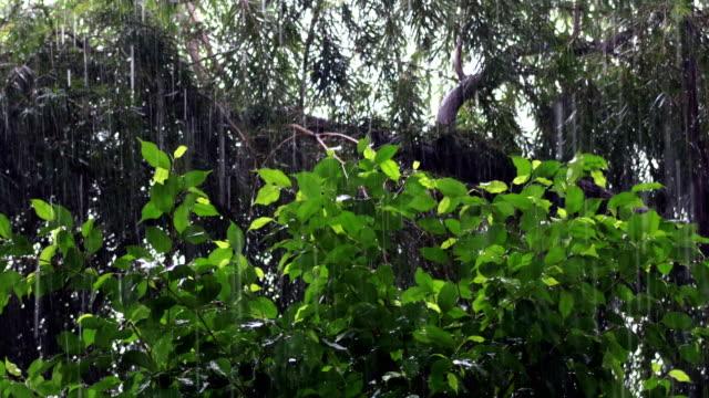 torrential rain & nature - season stock videos & royalty-free footage