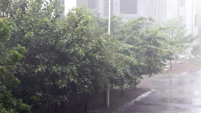 torrential rain - torrential rain stock videos & royalty-free footage