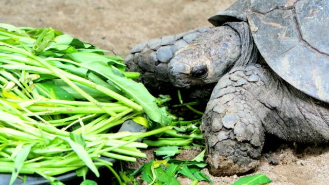 vídeos de stock, filmes e b-roll de tartaruga de comer - zoologia