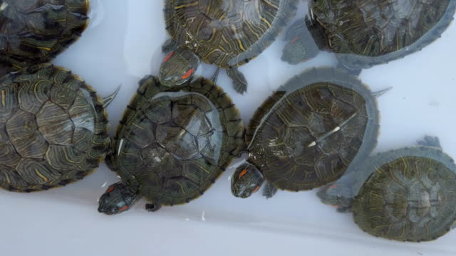 tortoise for sale - wildlife stock videos & royalty-free footage