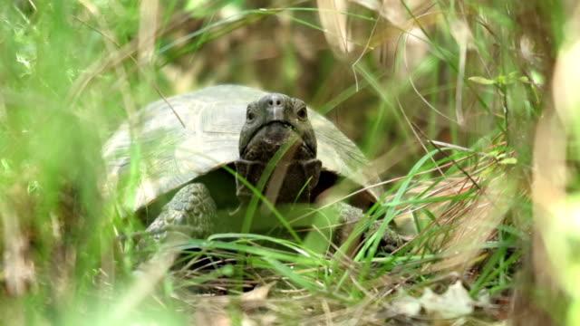 tortoise - tortoise shell stock videos & royalty-free footage