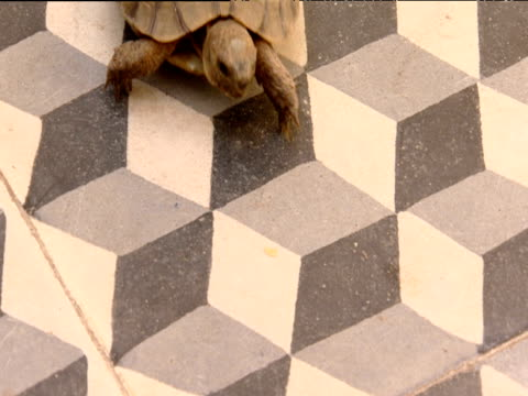 tortoise walks over black and white tiles - optical illusion stock videos & royalty-free footage