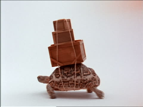 stockvideo's en b-roll-footage met tortoise with boxes strapped to shell walking in studio - zwaar