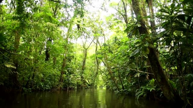tortuguero national park, costa rica, central america - costa rica stock-videos und b-roll-filmmaterial