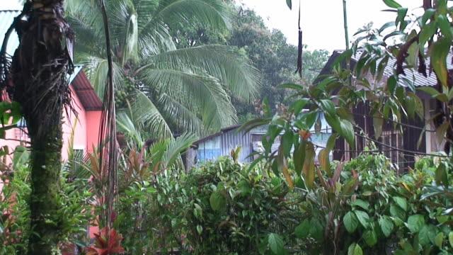 vídeos y material grabado en eventos de stock de tortuguero village bajo la lluvia - costa rica