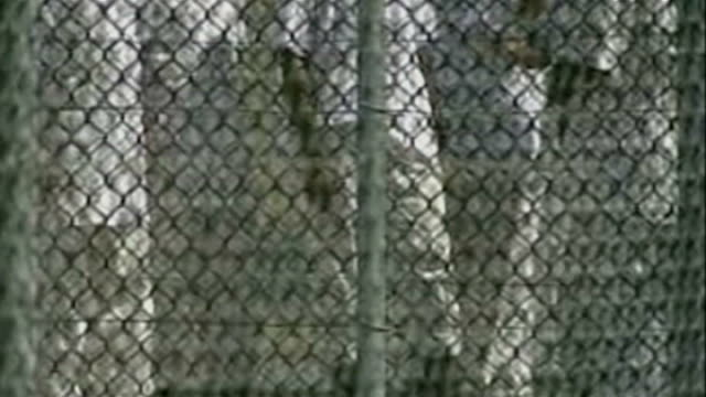 calls for inquiry into british involvement lib cuba guantanamo bay naval base camp delta ext detainee led along by us troops behind security fence... - detainee stock videos and b-roll footage