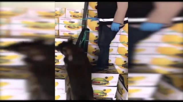 a total of 89 kilograms of cocaine was seized at istanbul's ambarli port on tuesday according to turkey's customs and trade ministry the cocaine was... - banana stock videos & royalty-free footage