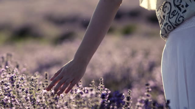 touch of lavender scent - sensory perception stock videos and b-roll footage