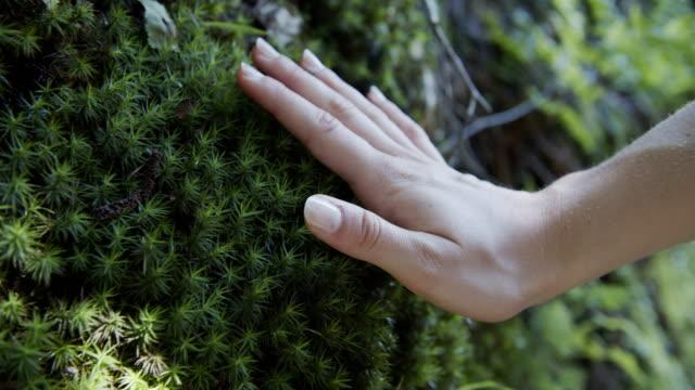vidéos et rushes de toucher la nature - mousse végétale
