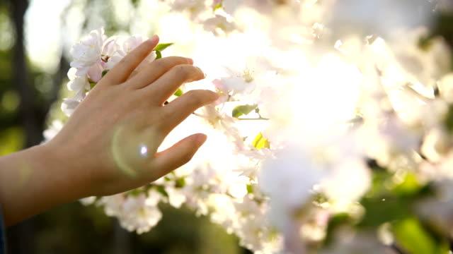 春に触れる - touching点の映像素材/bロール