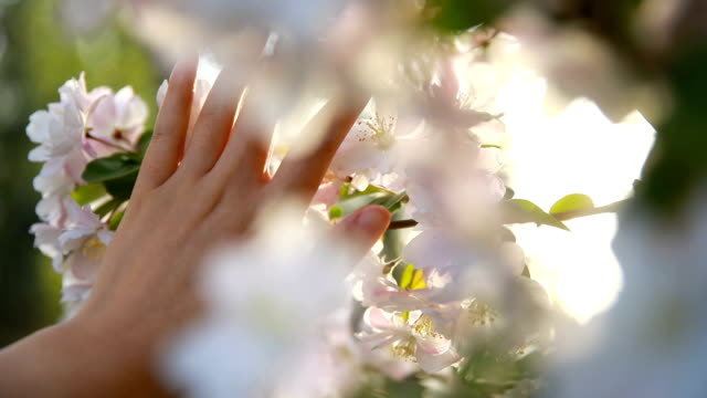 touching springtime - softness stock videos & royalty-free footage
