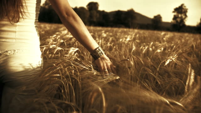 hd: touching the wheat - wrist watch stock videos & royalty-free footage