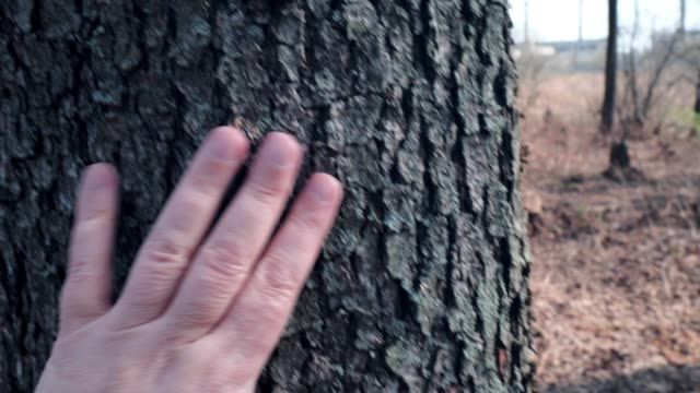 touching tree trunk - tree trunk stock videos & royalty-free footage