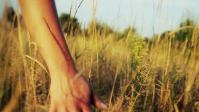 touching weeds - människofinger bildbanksvideor och videomaterial från bakom kulisserna