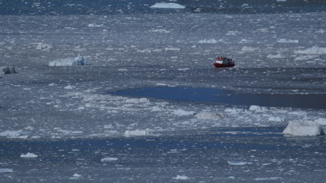 tourboat between ice floes and reflection - whale watching stock videos and b-roll footage