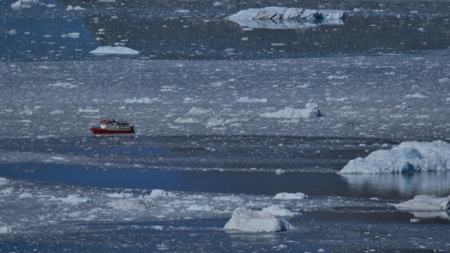 tourboat between ice floes with people - whale watching stock videos and b-roll footage