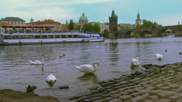 ws tourboats on vltava river with swans on shore / prague, czech republic - river vltava stock videos & royalty-free footage