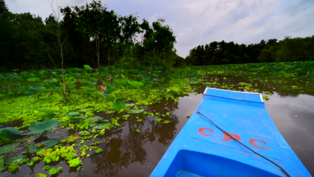 tourism rowing boat in tra su indigo plant forest in an giang, mekong delta, vietnam - mangrove tree stock videos & royalty-free footage