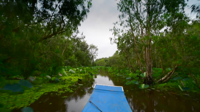 tourism rowing boat in tra su indigo plant forest in an giang, mekong delta, vietnam - vietnam video stock e b–roll