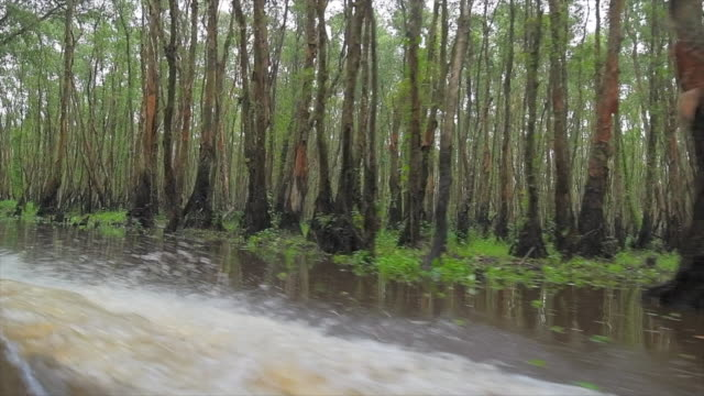 """""""tourism rowing boat in tra su indigo plant forest in an giang, mekong delta, vietnam - pianta acquatica video stock e b–roll"""