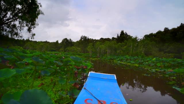 """vídeos de stock, filmes e b-roll de """"turismo barco a remos na floresta de planta índigo tra su em an giang, delta do mekong, vietnã - organismo aquático"""