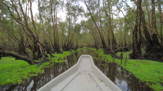 """""""tourism rowing boat in tra su indigo plant forest in an giang, mekong delta, vietnam - mangrove tree stock videos & royalty-free footage"""