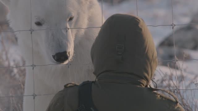 Tourist admires polar bear, Canada