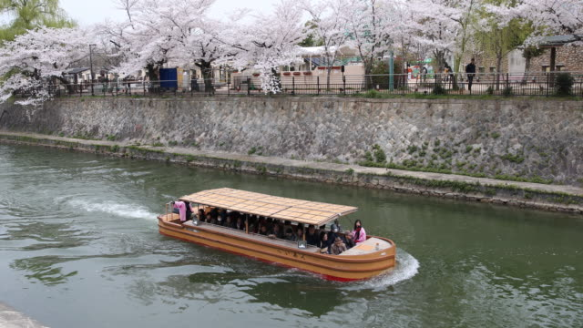 vídeos de stock e filmes b-roll de tourist boat cruising over a water canal in kyoto, in the background colorful cherry blossom trees can be seen. - prunus taihaku