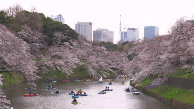 tourist feiert kirschblüte im park in tokio - tokyo japan stock-videos und b-roll-filmmaterial