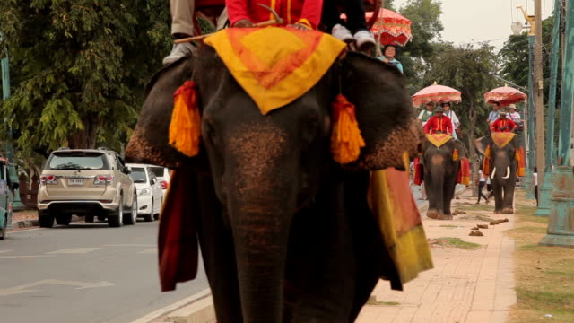 Tourist group rides through the city on the backs of elephants