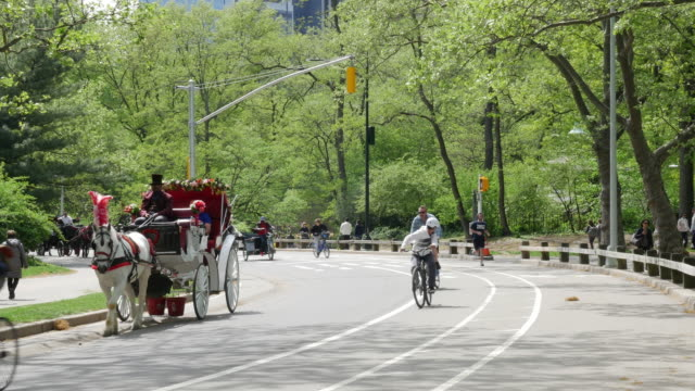 Tourist horse cart and bike cycling in Central Park, New York City