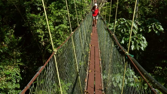 tourist on famous tree top canopy walkway in borneo - dizzy stock videos and b-roll footage