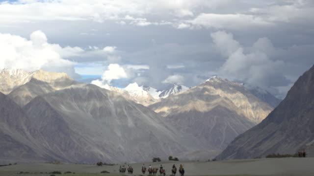 vidéos et rushes de tourist riding bactrian camels in camel train among the hunder sand dunes in nubra valley, ladakh, india - monter sur un moyen de transport