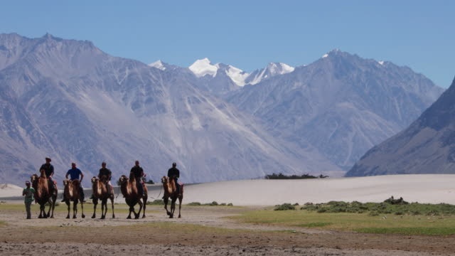 Tourist taking camel rides on the domesticated Bactrian camels at the Sand Dunes of Nubra valley