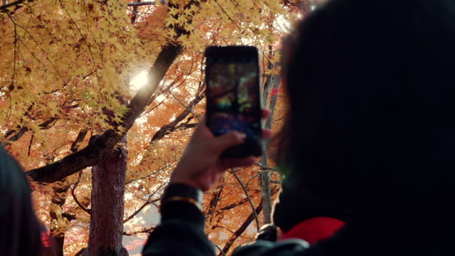 tourist taking photos yellow maple leaves with smart phone. - november stock videos & royalty-free footage