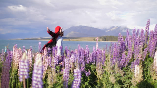 tourist travel in new zealand - famous place stock videos & royalty-free footage