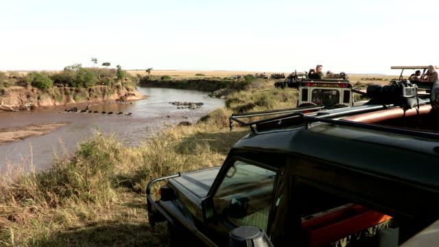 tourist vehicles watching wildebeest migration crossing mara river.masa mara game reserve.kenya - remote location stock videos & royalty-free footage