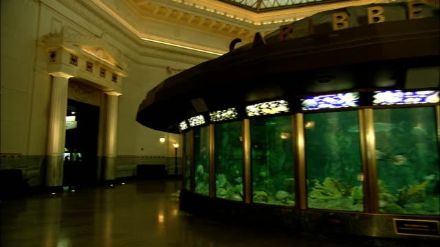 vídeos de stock e filmes b-roll de a tourist views fish inside a circular aquarium. - aquário john g shedd