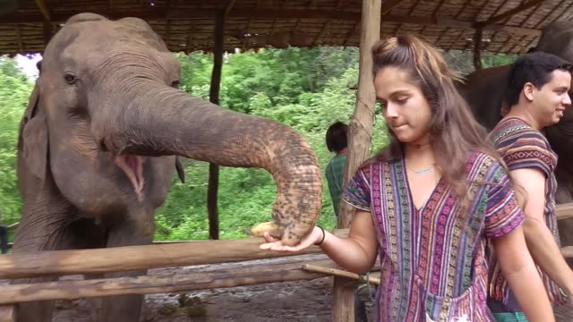 tourist visit an elephant sanctuary outside of chiang mai ecotourism and animal rights have made them popular - chiang mai province stock videos & royalty-free footage