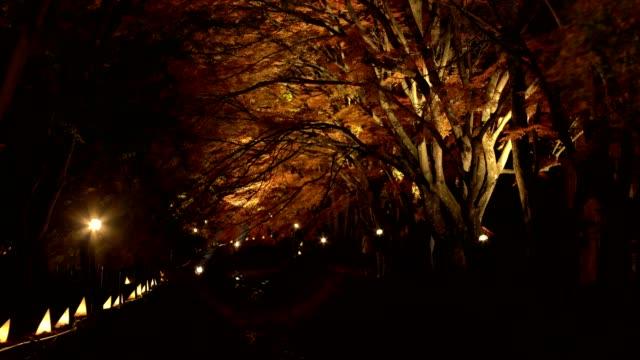 tourist visiting maple corridor or momiji tunnel at autumn night in kawaguchiko,yamanashi, japan - japanese maple stock videos & royalty-free footage