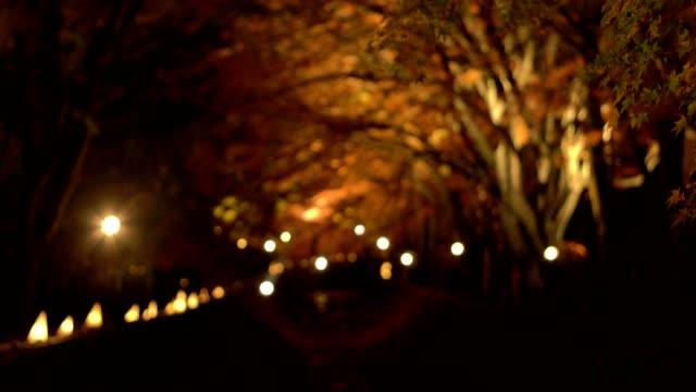 山梨県河口湖で秋の夜もみじ回廊やもみじのトンネルを訪れる観光客 - カエデ点の映像素材/bロール