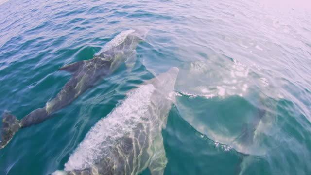 vídeos y material grabado en eventos de stock de pov turista ver delfines desde un barco - cetáceo