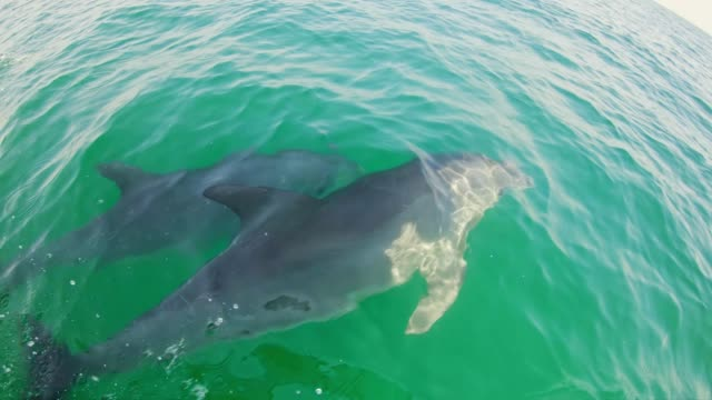 slo mo tourist watching dolphins from a boat - dolphin stock videos & royalty-free footage