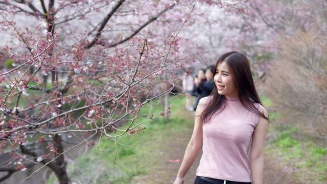 vidéos et rushes de femme touriste profiter en fleurs de cerisier de printemps - verger