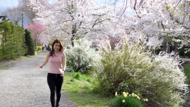 tourist woman enjoy in spring cherry blossoms - shrine stock videos & royalty-free footage
